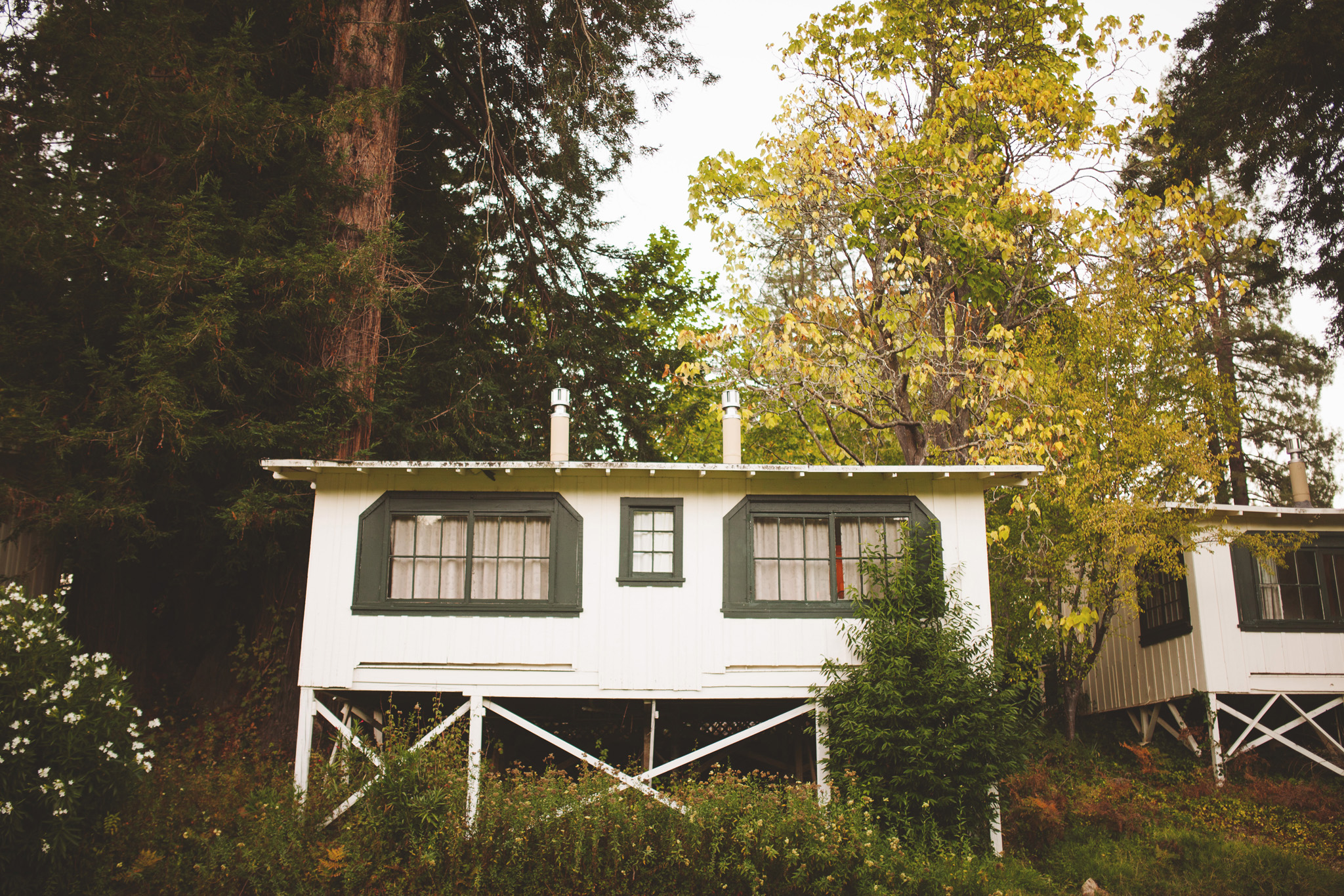 California Redwood Wedding Venue Dawn Ranch Guerneville wedding pictures