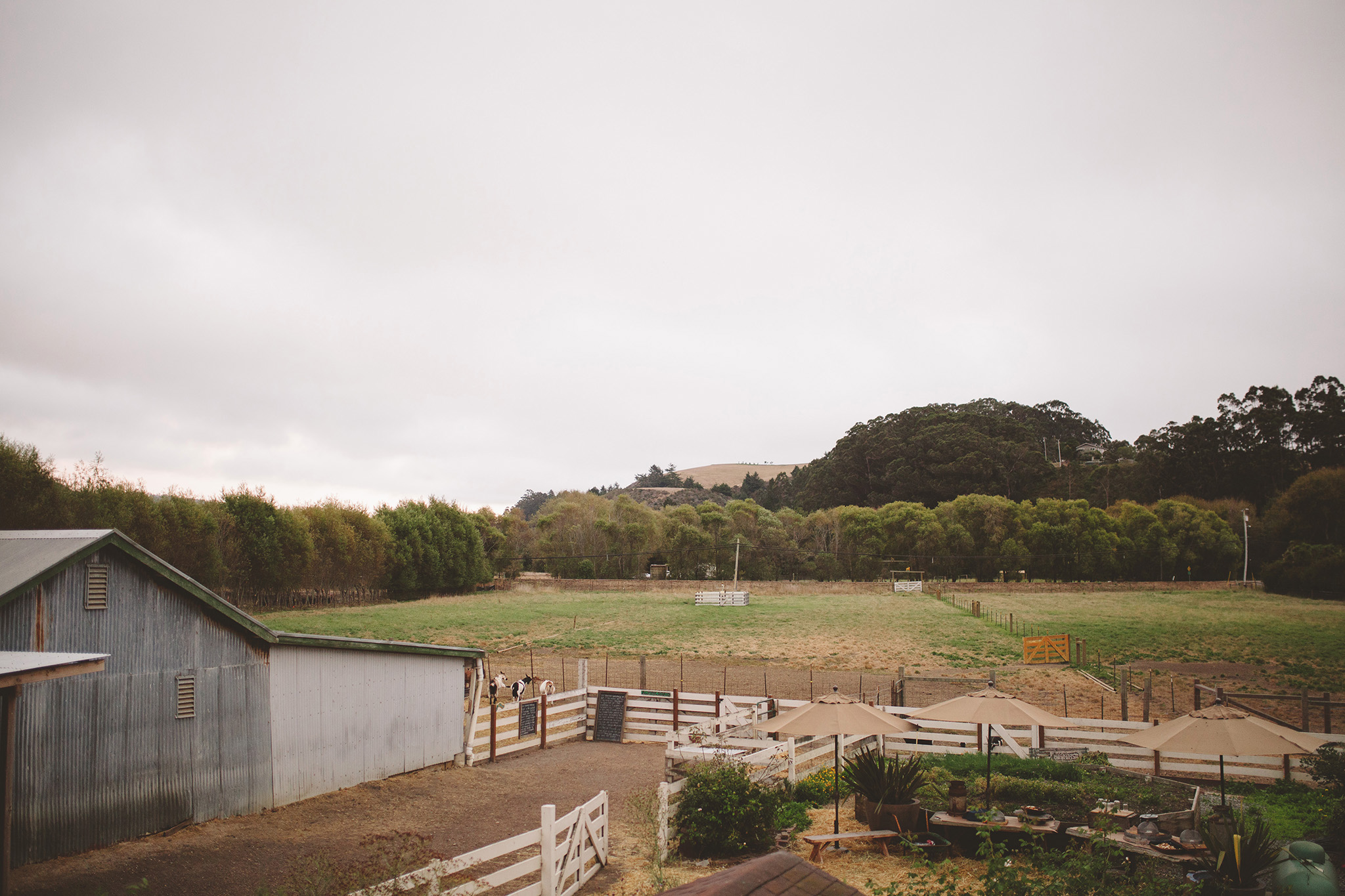 Harley goat farm wedding pictures in Pescadero california